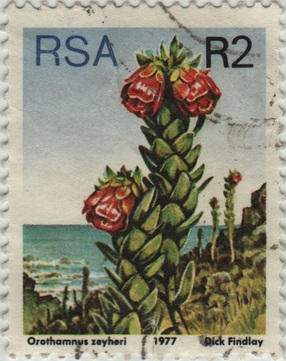 Sauth Africa floral stamp