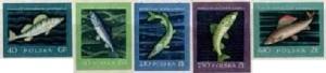 PL-1958-szlachetne-gatunki-ryb