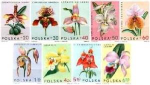 PL-1965-storczyki