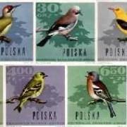 PL-1966-ptaki-lesne